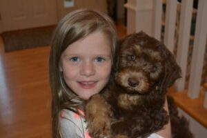Australian Labradoodle Ruby with Libbi
